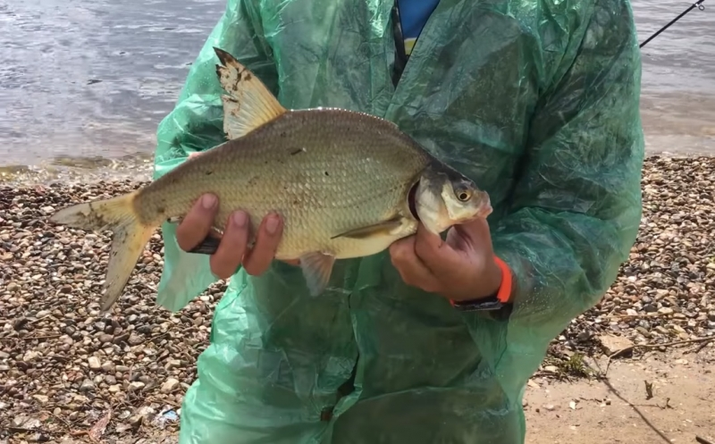 ловля рыбы на озере летом