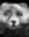 bear-st