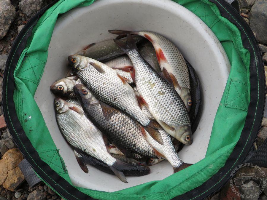 рыбацкий форум спб новости с водоемов