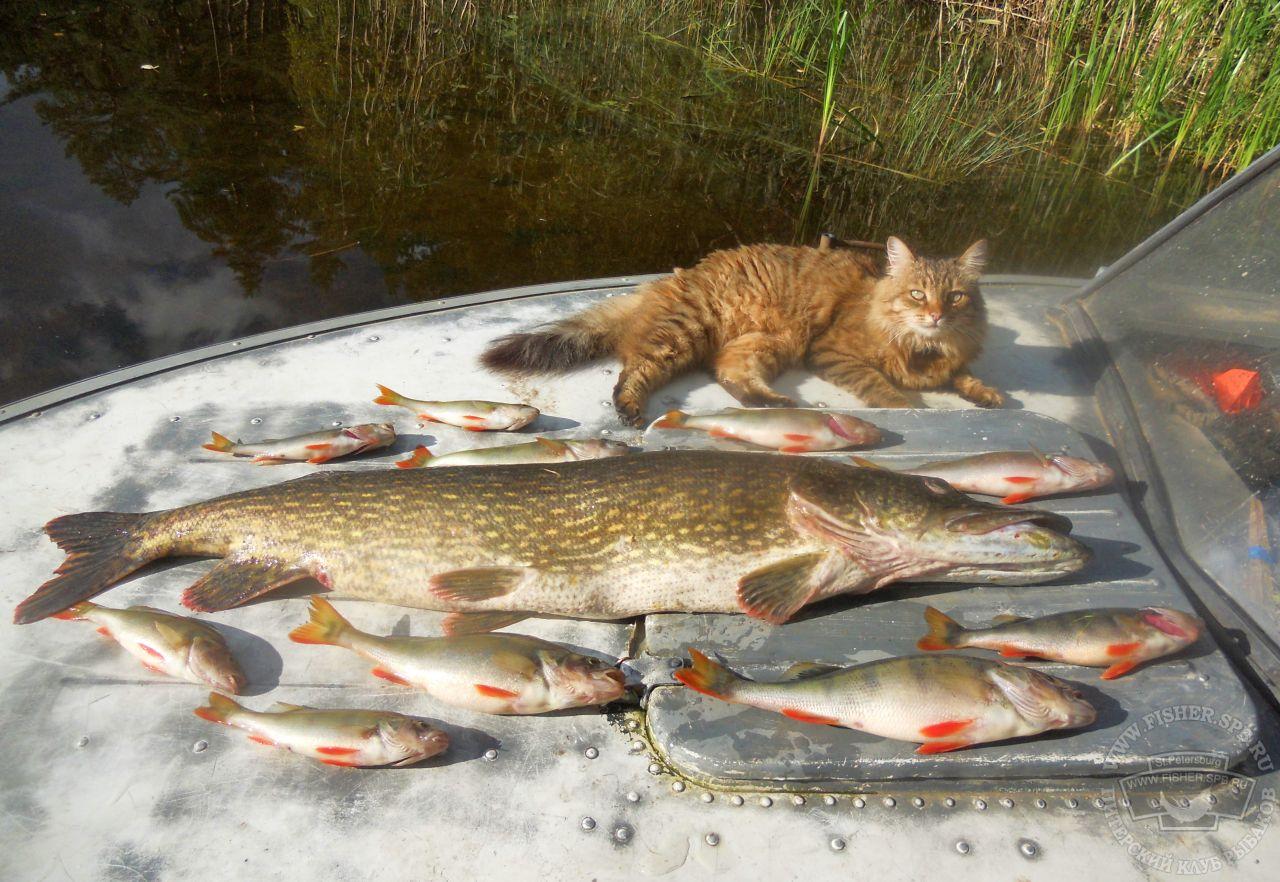 На что ловить рыбу в царицыно