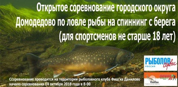 Плакат (Домодедово).jpg