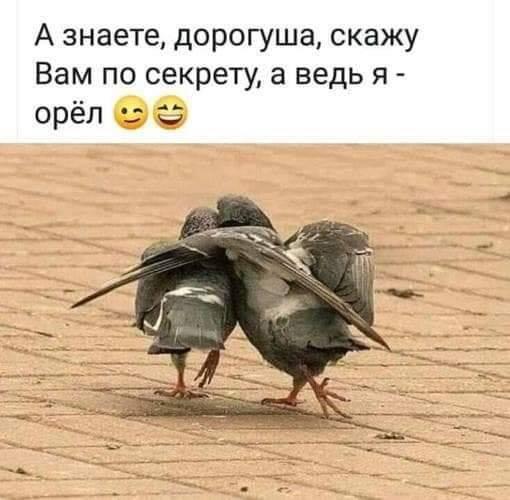 орёл.jpg
