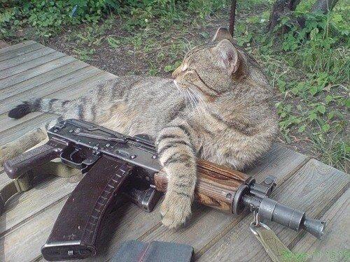 кот с автоматом.jpg
