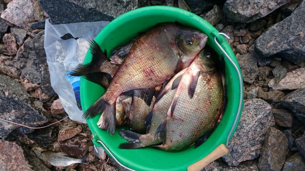 питерский рыболов