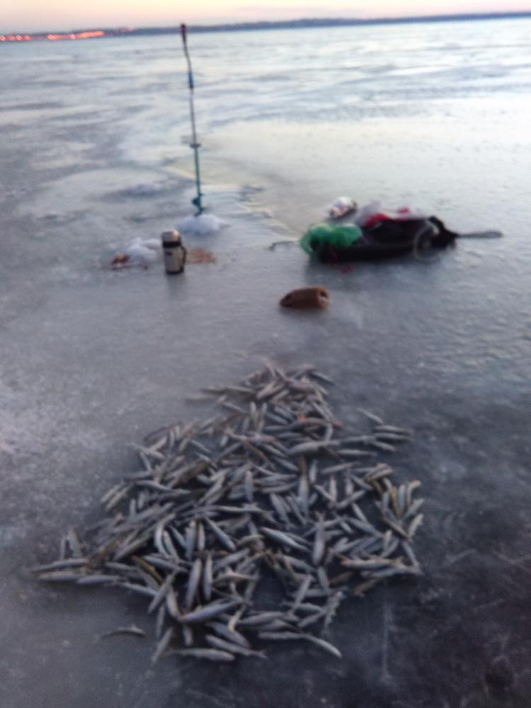 правила рыбалки финский залив