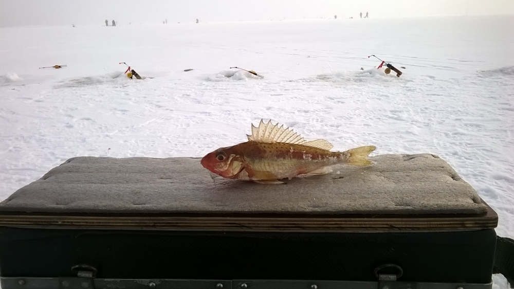 интернет магазин питерский рыбак