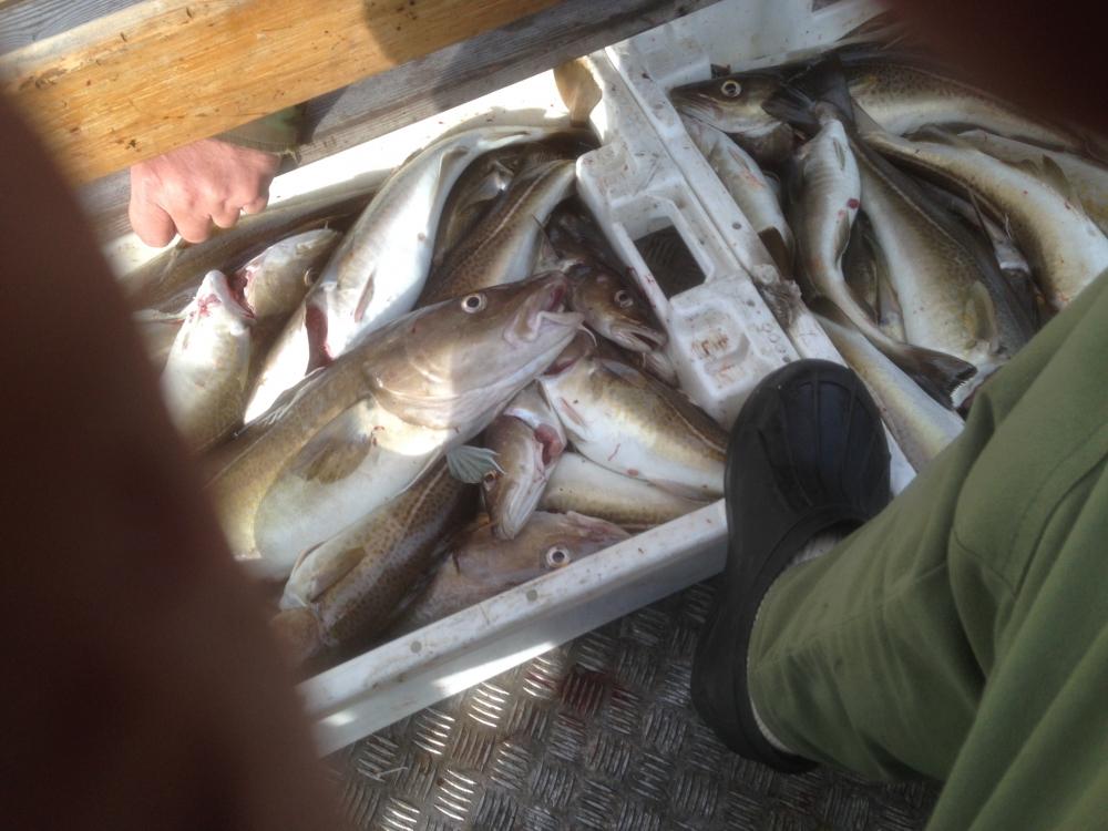 рыбалка на границе с норвегией