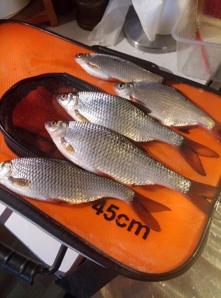 клуб рыбаков фишер