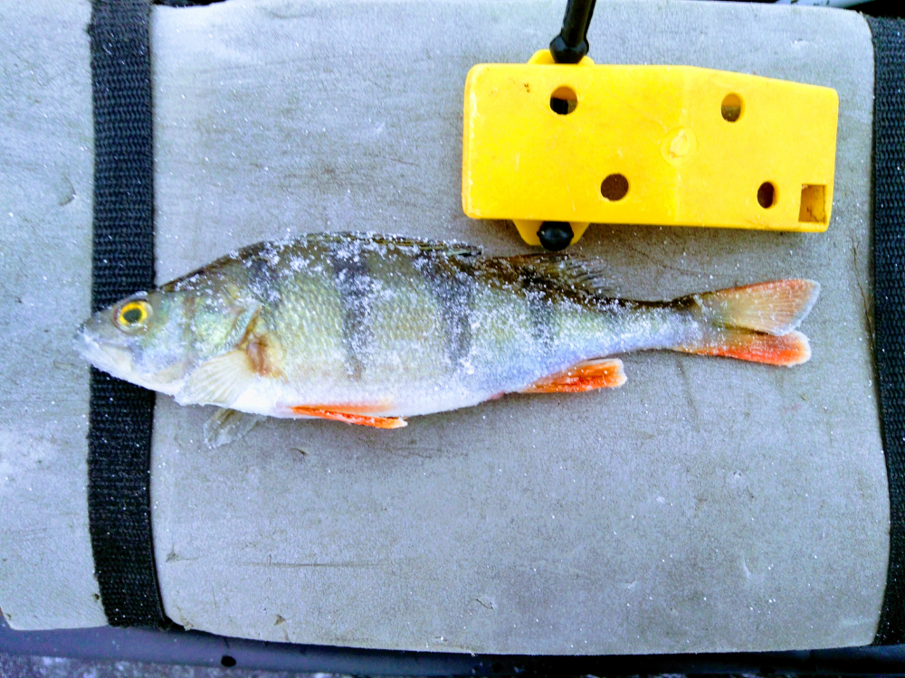 на рыбалку финский залив приморск