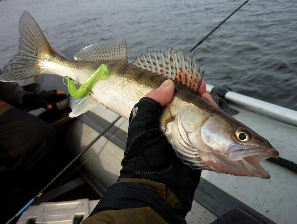 прогноз клева рыб в бармино
