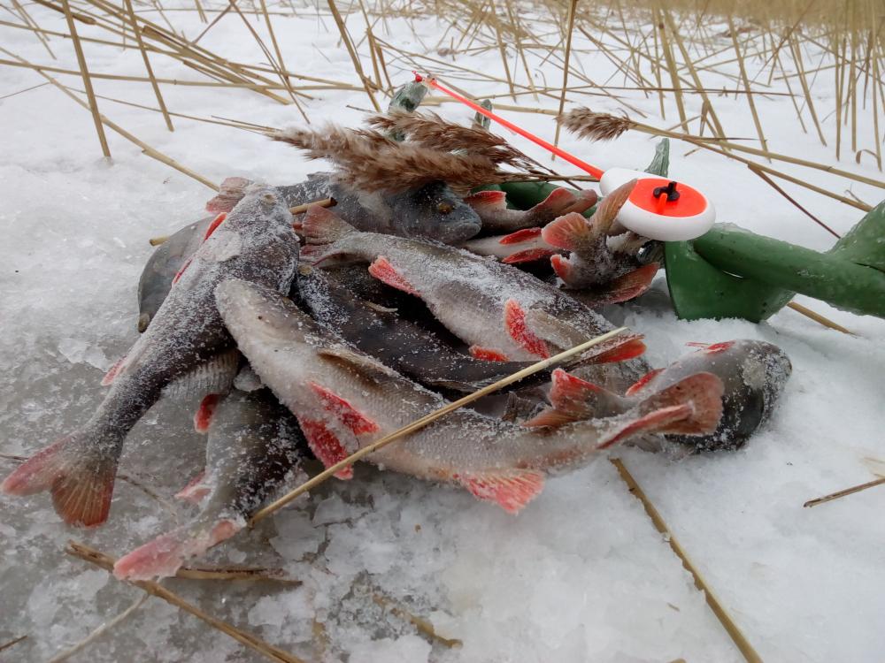 рыбалка в карелии базы на ладожском озере