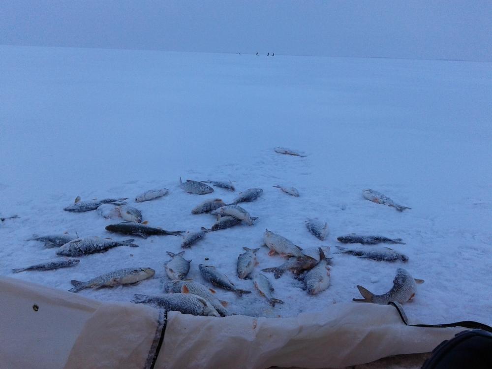 рыбная ловля на финском заливе
