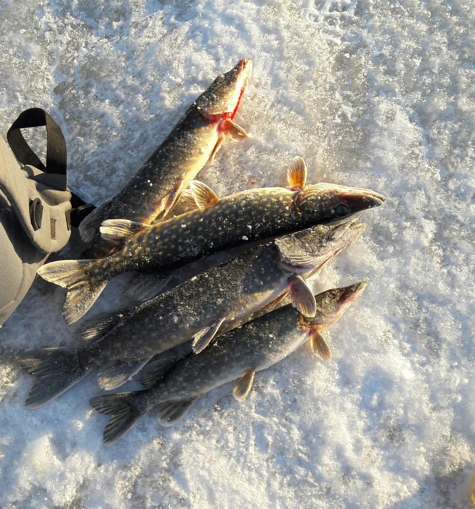 псковский форум рыбаков новости с водоемов