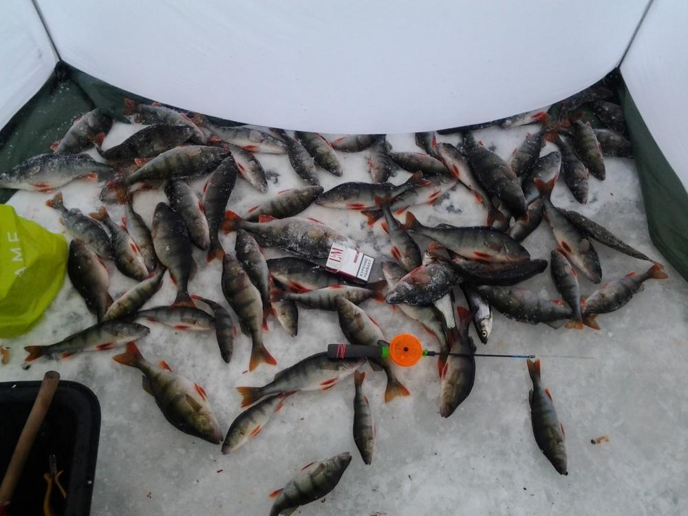 как рыбалка на ладожском