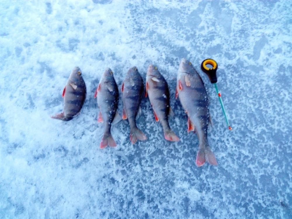 клуб питерских рыбаков новости с водоемов ладожское озеро