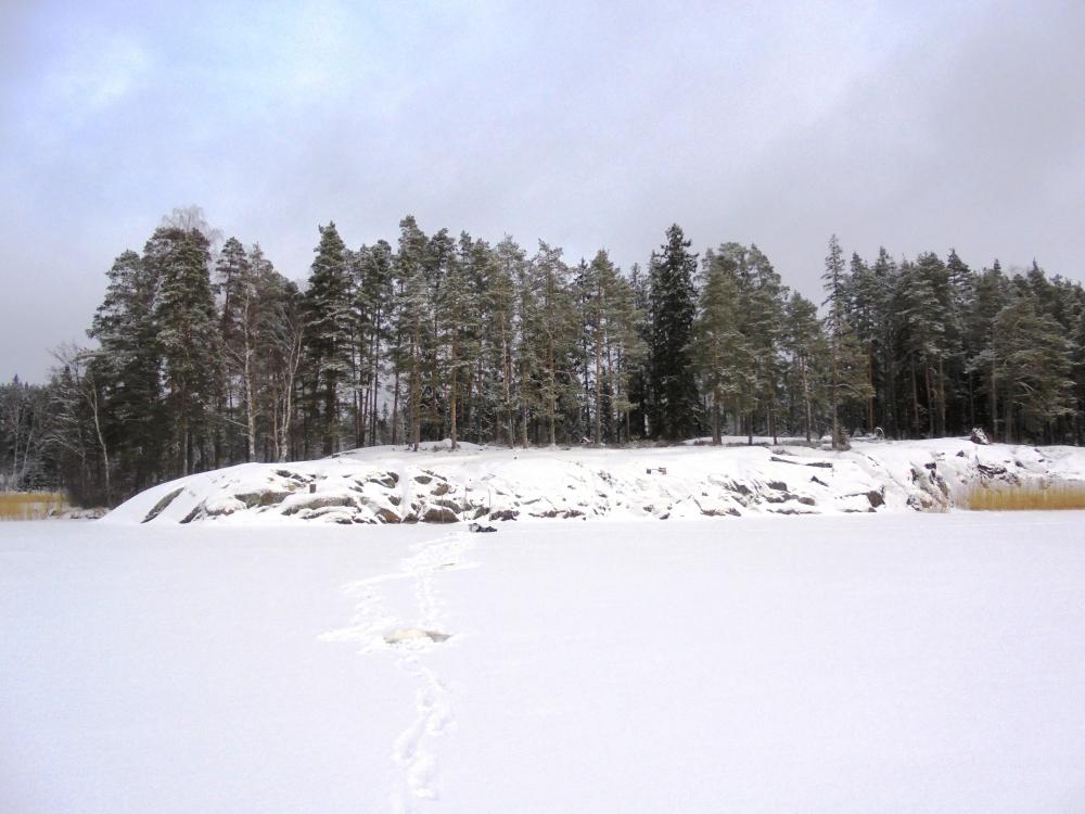 курчатовское водохранилище ловля карася