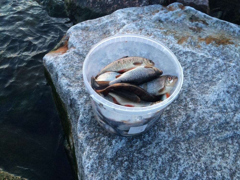 Финский залив рыбалка в мае 2016