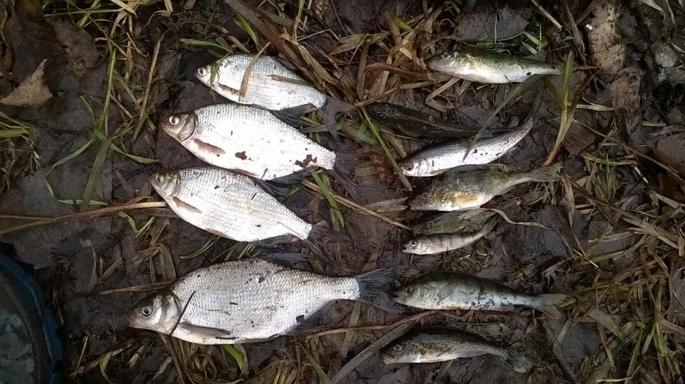 Новости с водоемов  питерский клуб рыбаков Ладога