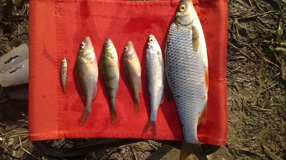рыболовные новости с водоемов спб