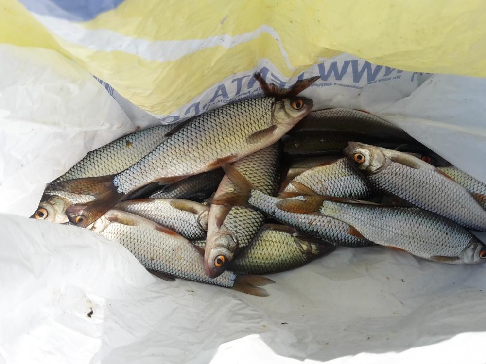 новости о рыбалке на ладожской
