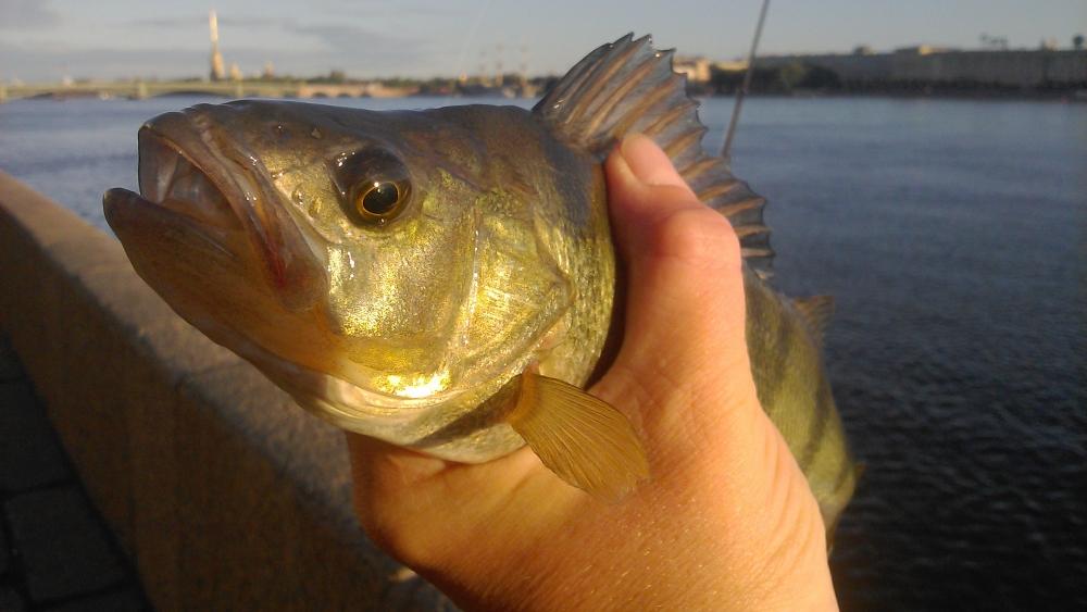 спб клуб рыбаков новости с водоемов отчеты о рыбалке