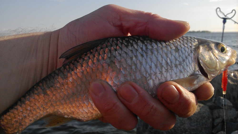 прогноз клева рыбы во  калач-на-дону возьми неделю