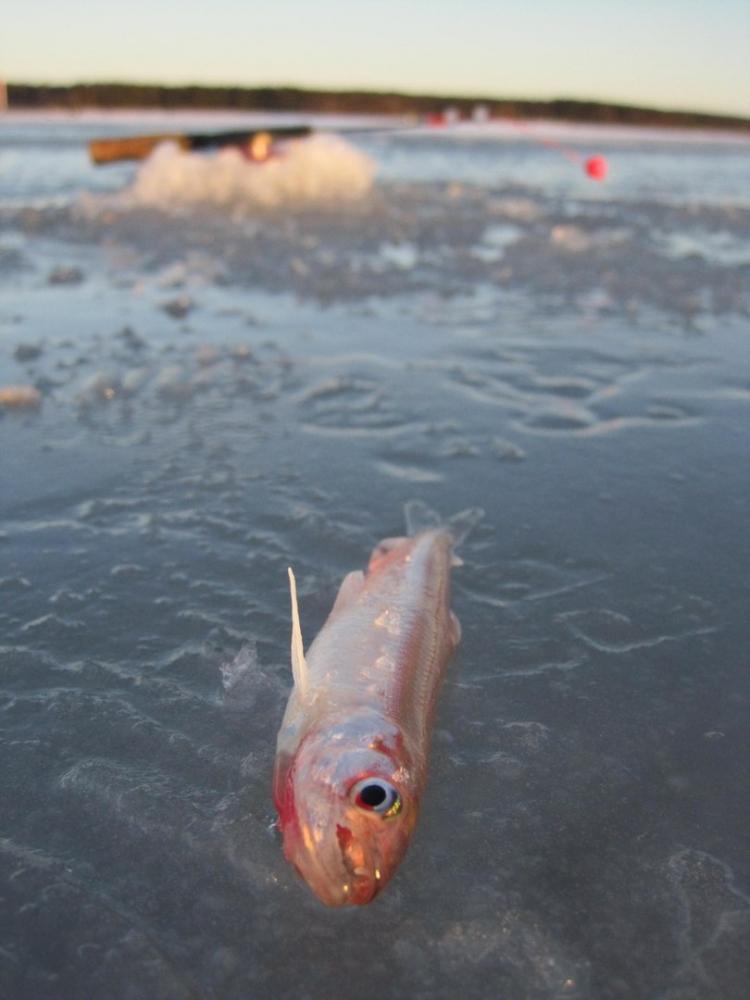 Питерский клуб рыбаков  новости с водоемов www Fisher spb ru