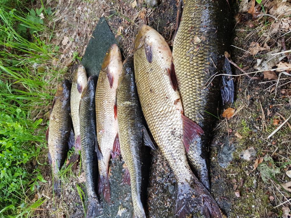 апрашка спб рыбалка