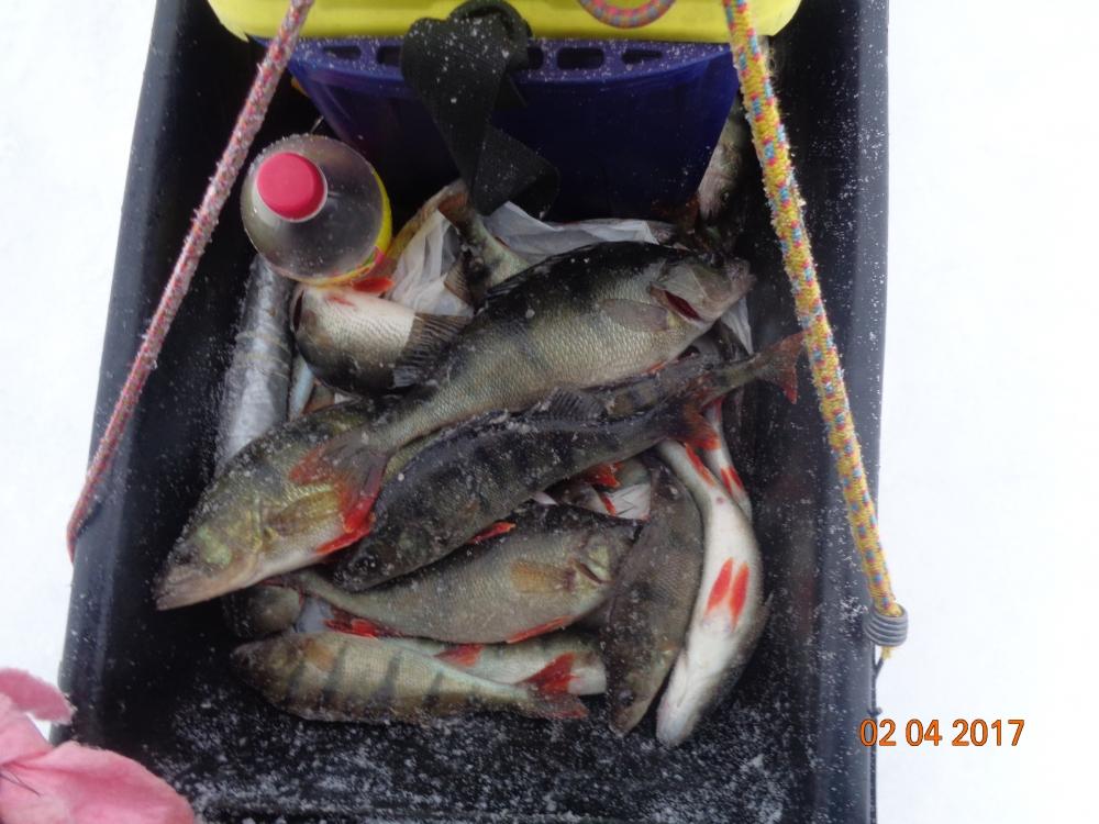 новости с ладожского озера от рыбаков
