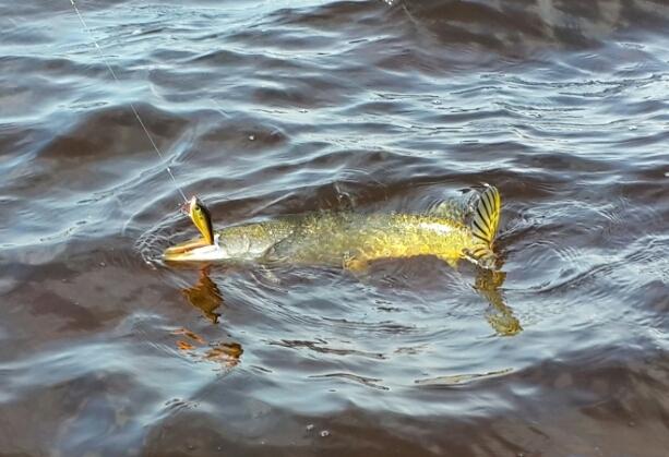 отчет о рыбалке на цимле