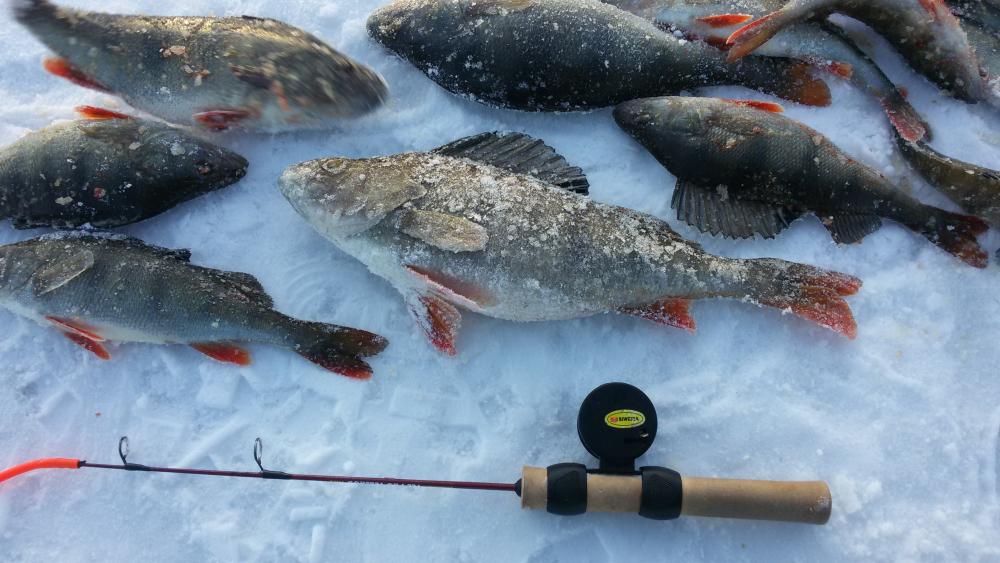 свежие новости с ладожского озера по рыбалке можете