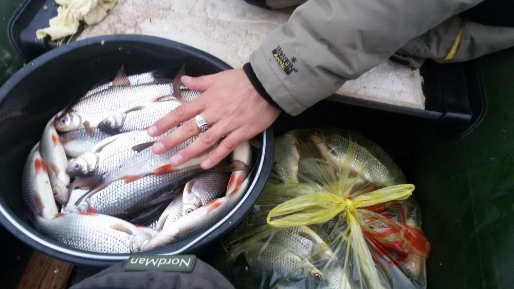 Ладожское озеро запрет на рыбалку осень 2016