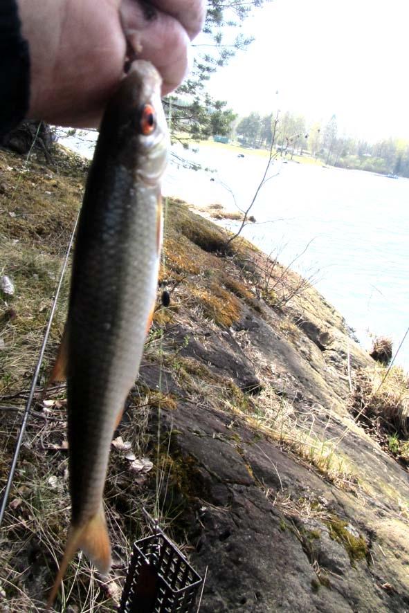 рыбалка на кильполе