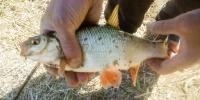 клев рыбы на реке волхов